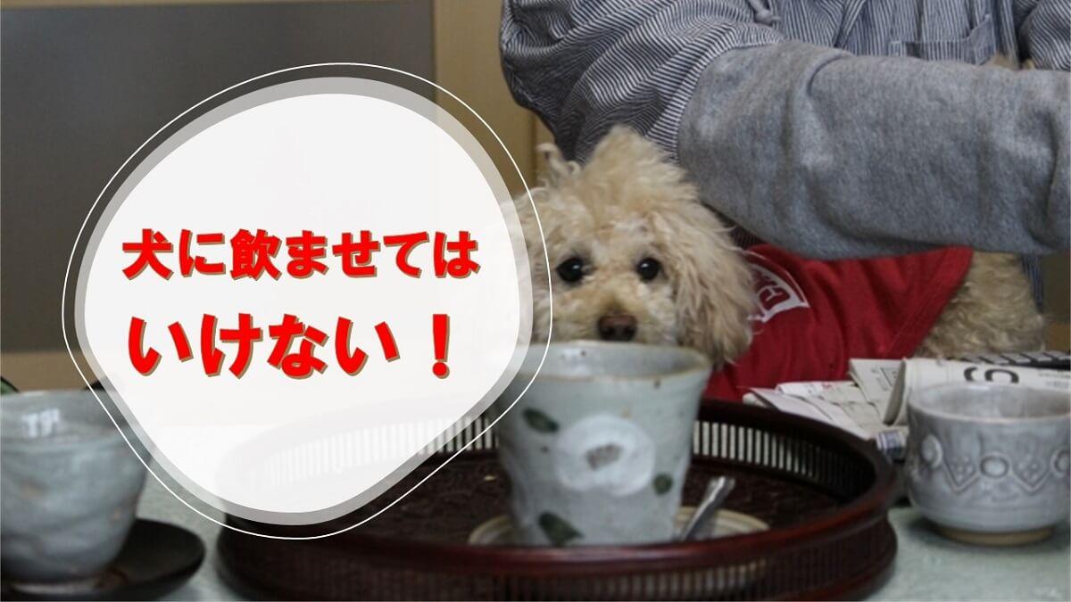 犬に緑茶を飲ませる