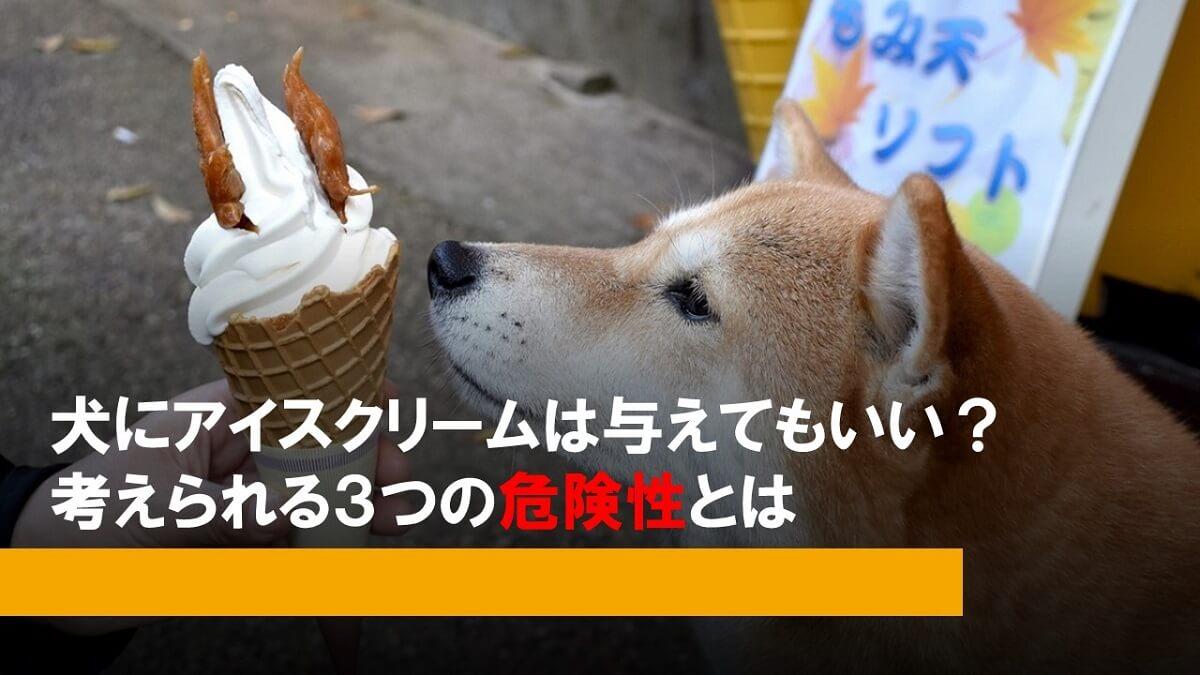 犬にアイスクリーム