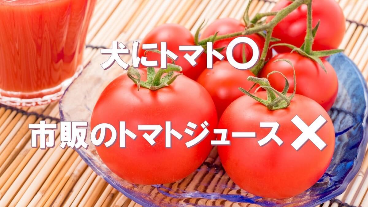 犬はトマトを食べても大丈夫だけど、市販のトマトジュースはダメ!