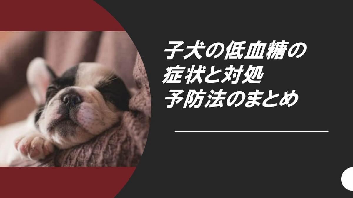 子犬の低血糖