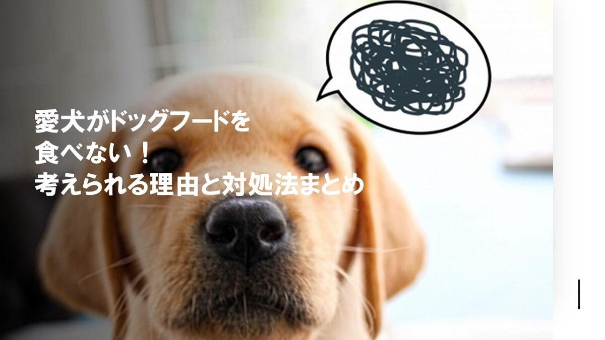 犬がドッグフードを食べない