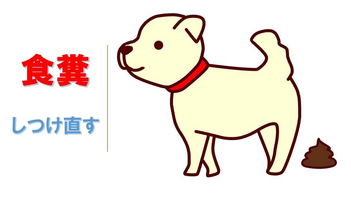 犬の食糞をしつけ治す!簡単で効果絶大な5つの秘策を公開