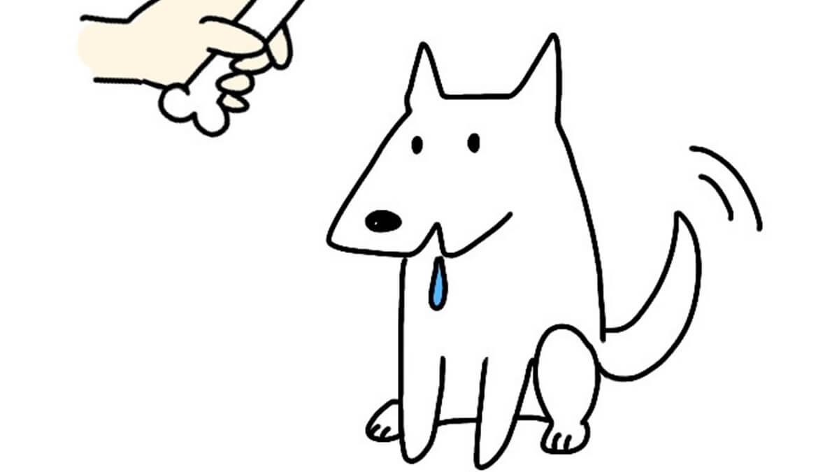犬用トリーツポーチ(おやつケース)のおすすめメーカー3選