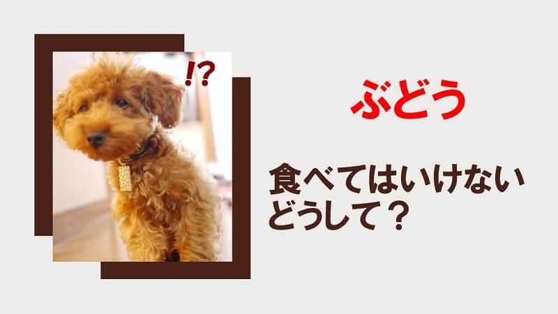 なぜ犬にぶどうを食べさせてはいけないの?