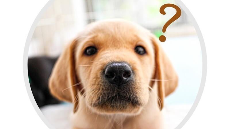 犬の涙やけの原因は主に5つに分類される