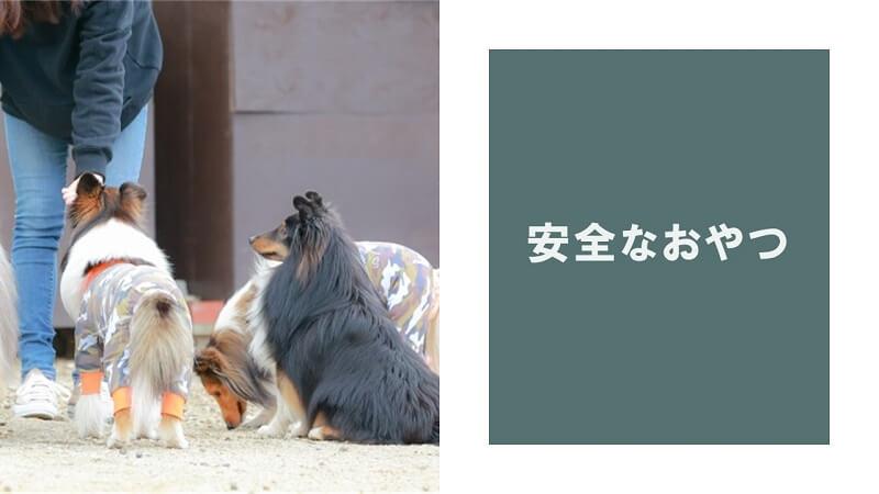 子犬でも食べられる安全なおやつランキングベスト3