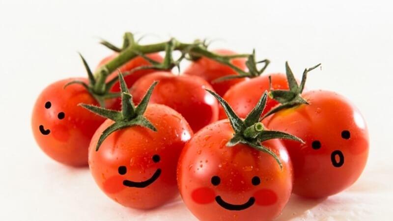 犬にトマトを与えても良い理由